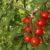 Tomates Harmony